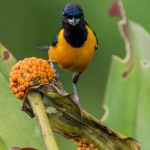 Vögel in Yasuni